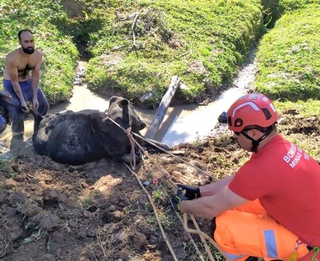 bombeiros fazem a retirada do animal com sistema de redução de força