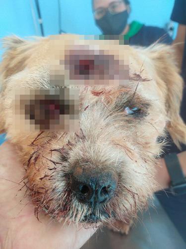 Cão sobrevivente ficou muito ferido. Condição é considerada grave