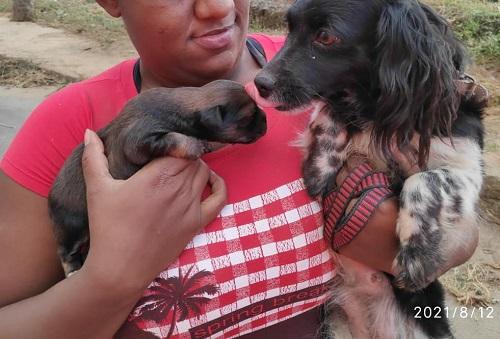 Cadela e filhotes foram resgatados