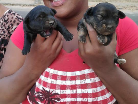 Filhotes na mão da proprietária